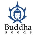 Buddha Seeds Added